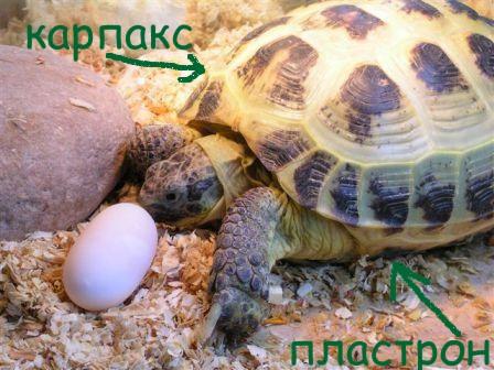 http://www.maksimyma.narod.ru/wswsws.jpg